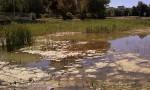 wetland-002